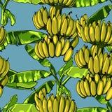 Sömlös tropisk modell med banansidor också vektor för coreldrawillustration Arkivfoton