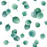 Sömlös växt- modell med eukalyptussidor Royaltyfria Bilder