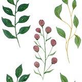 Sömlös vattenfärgillustration Gröna filialer av växter och sidor vektor illustrationer