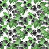 Sömlös vattenfärgmodell med den svarta vinbäret Floeral backgrou Royaltyfri Fotografi