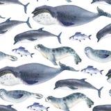 Sömlös vattenfärgmodell om havsfaunor Marin- djur Delfin, val, fisk och skyddsremsa på vit bakgrund fotografering för bildbyråer