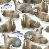Sömlös vattenfärgmodell om norr faunor Havsdjur och fisk Brun warlus på snö royaltyfri fotografi