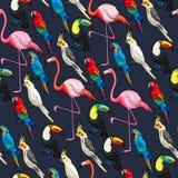 Sömlösa exotiska fåglar royaltyfri illustrationer