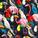 Sömlösa exotiska fåglar stock illustrationer