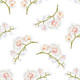 Sömlösa växter för vita blommor för Phalaenopsis för texturfilialorkidér tropiska gör grön stammen och slår ut tappningvektorn Royaltyfri Fotografi