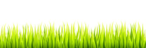 Sömlösa vårgräslinjer för att kanta, footer och garneringar Vårgroddar växer i ett dagsljus royaltyfri illustrationer