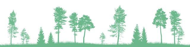 Sömlöst vektorlandskap med gröna barrträd och gräs Arkivfoton