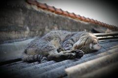 sömn arkivfoton
