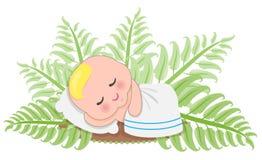 Sömn behandla som ett barn i ormbunke Arkivfoton
