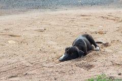 Sömn för svart hund på jordningen Royaltyfria Bilder