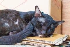 Sömn för svart katt på det bruna papperet Royaltyfri Fotografi