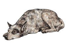 Sömnig ensam hund vektor illustrationer