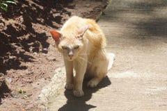 sömnig fet katt royaltyfri fotografi