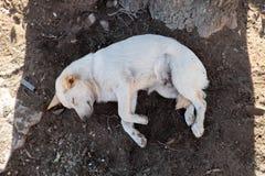 sömnig hund Royaltyfri Foto