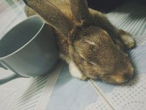 sömnig kanin Royaltyfria Foton