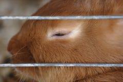 sömnig kanin Royaltyfri Bild