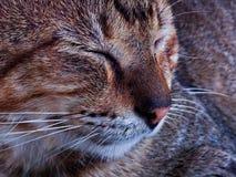Sömnig katt Arkivfoton