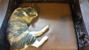 Sömnig katt royaltyfri foto