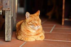 sömnig katt Arkivfoto