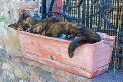 Sömnig katt. Arkivbild