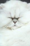 Sömnig katt Arkivbilder