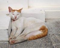 Sömnig katt Den älskvärda katten sover på det konkreta golvet arkivfoto