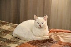Sömnig katt på sängen Royaltyfri Fotografi