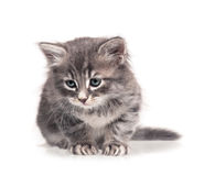 Sömnig kattunge Royaltyfri Bild