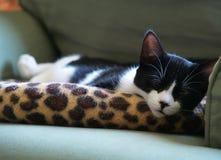 sömnig kattunge Arkivfoto