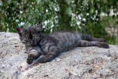 sömnig kattunge Arkivbilder