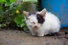 sömnig kattunge Royaltyfri Foto