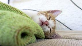 Sömnig kattunge på en blått- och gräsplanhandduk Royaltyfri Bild
