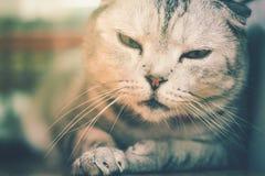 Sömnig lat katt Arkivfoto