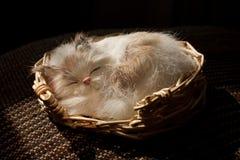 sömnig toy för katt Royaltyfria Foton