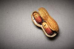 Sömniga jordnötter Arkivfoto