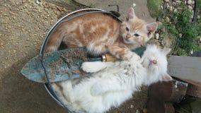 sömniga kattungar Arkivbilder