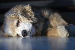 sömnigt Fotografering för Bildbyråer