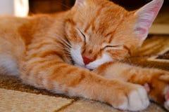 Sömningefärakatt Royaltyfri Foto