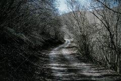 söndag går i skog Royaltyfri Bild
