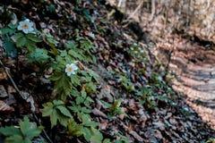söndag går i skog Fotografering för Bildbyråer