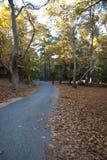 Söndagen går i oakskogen Arkivfoton