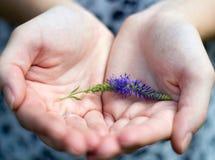 Sönderriven blomma Fotografering för Bildbyråer