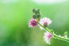 Sönderrivet gräs Arkivbild