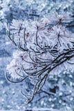 Sörja av huangshan berg 02 Royaltyfri Bild