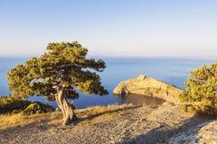Sörja bara trädet som växer på lutningen av berget i Krimet royaltyfria foton