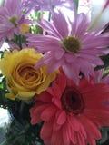 Sörja blom Royaltyfria Foton