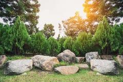 Sörja den dekorerade trädgården för trädet med stenar royaltyfri bild