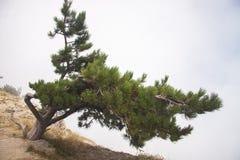 sörja den enkla treen Royaltyfri Foto