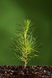 sörja den små treen för växten Arkivbilder