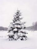 sörja den snöig treen Arkivbild